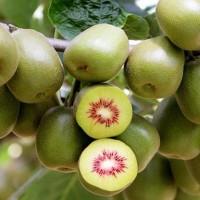 【红心猕猴桃】四川红心猕猴桃产地直供,量大从优